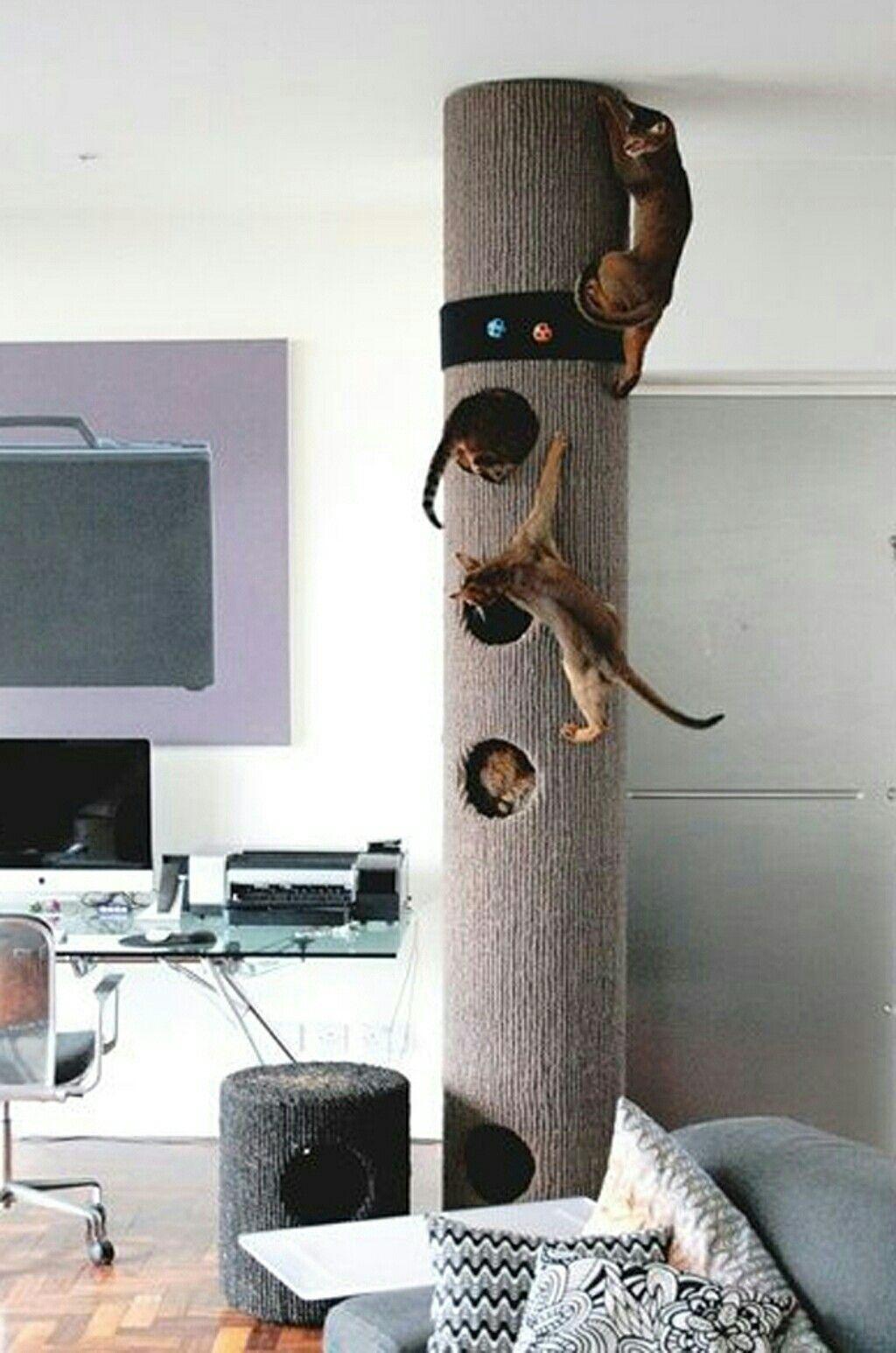 Квартирные идеи для кошек фото 24