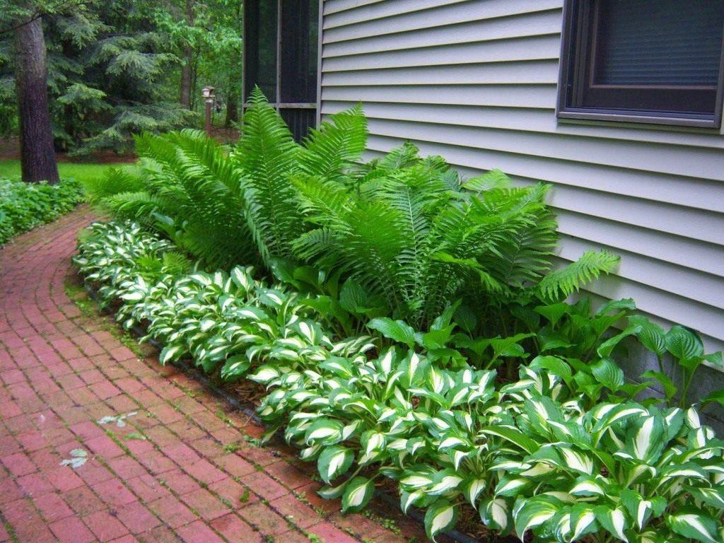 Садовые папоротники фото 1