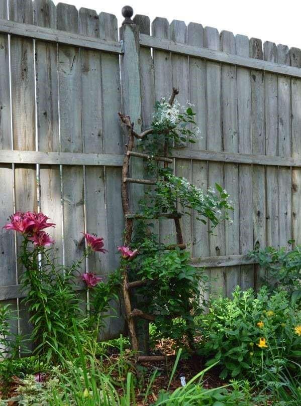 пространство в вашем саду фото 3