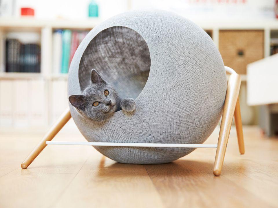 Квартирные идеи для кошек фото 12
