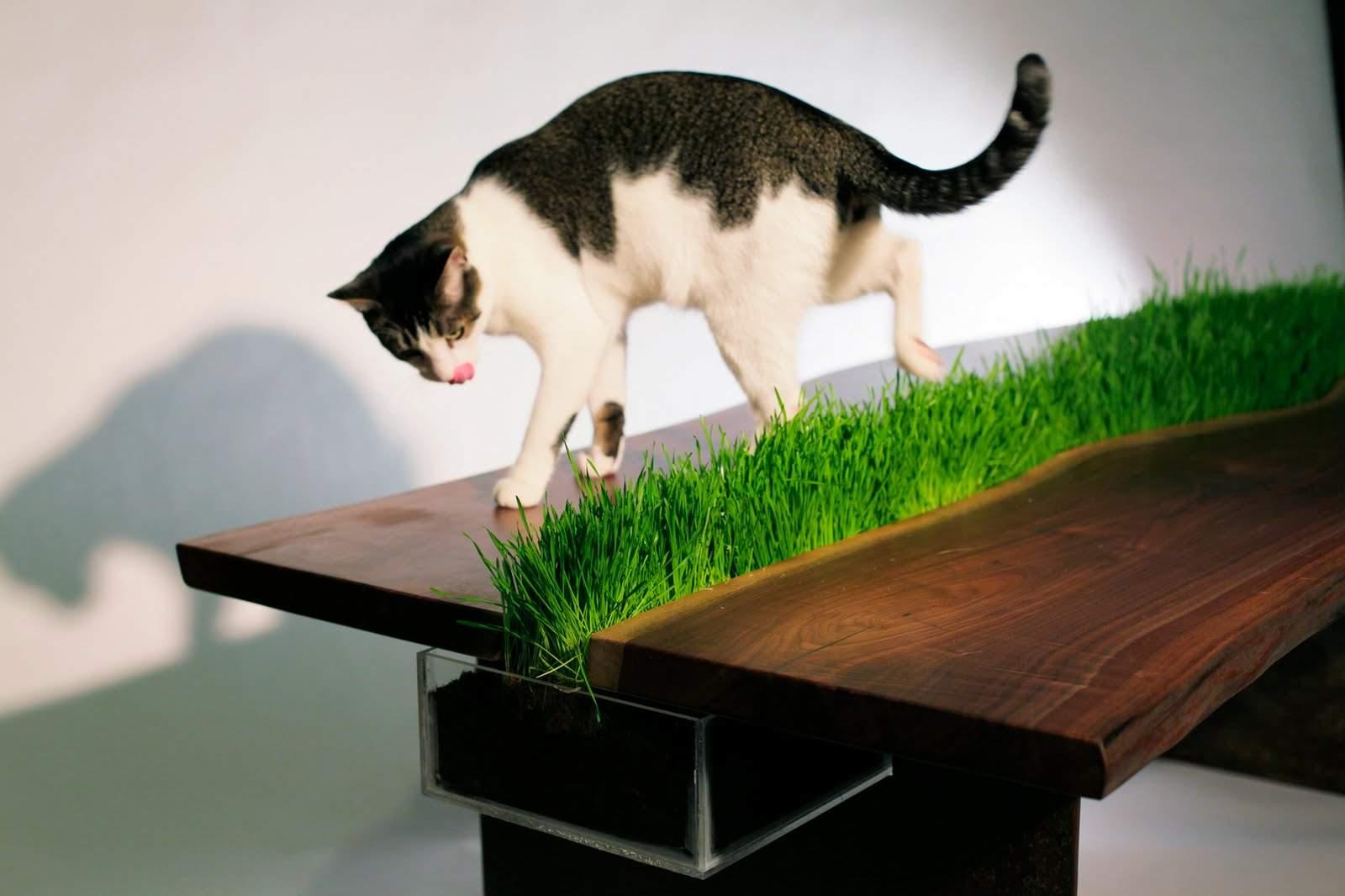 Квартирные идеи для кошек фото 6