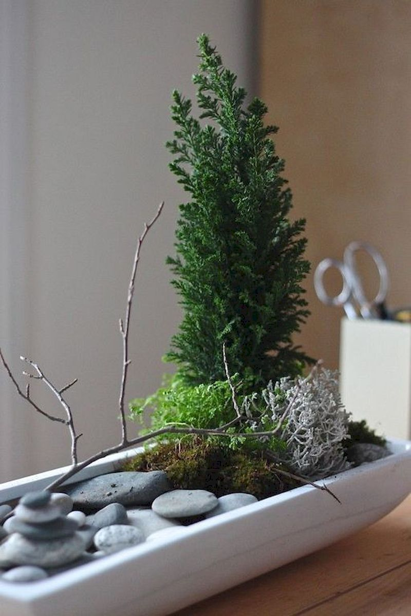модный мини-сад у себя на подоконнике фото 19