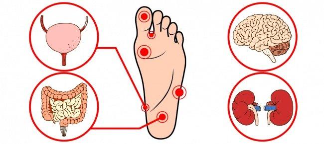 точки давления для ускорения метаболизма фото 5